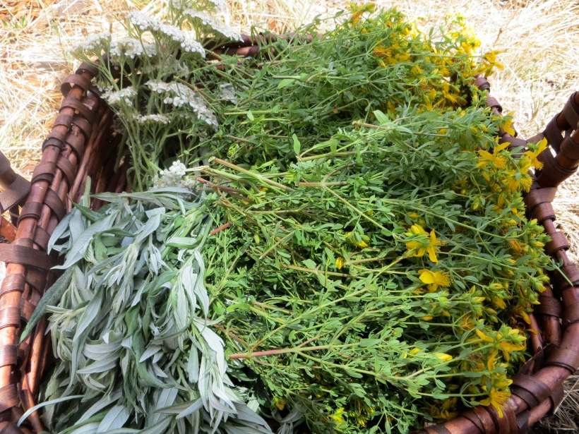 "a ""trinity"" of herbs basket of California mugwort, St. John's Wort, and Yarrow"